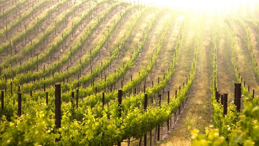vineyard-loans