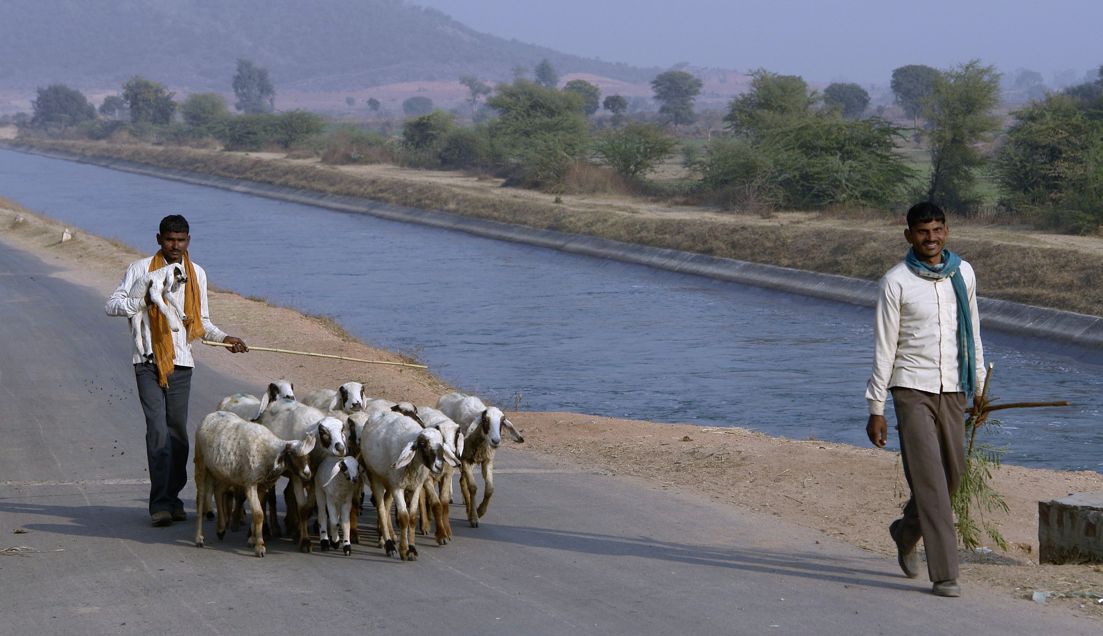 Shepherds,_Chambal,_India